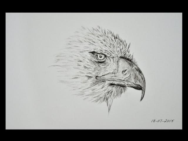ClodiSuares_charcoal_drawing_Eagle_Eye