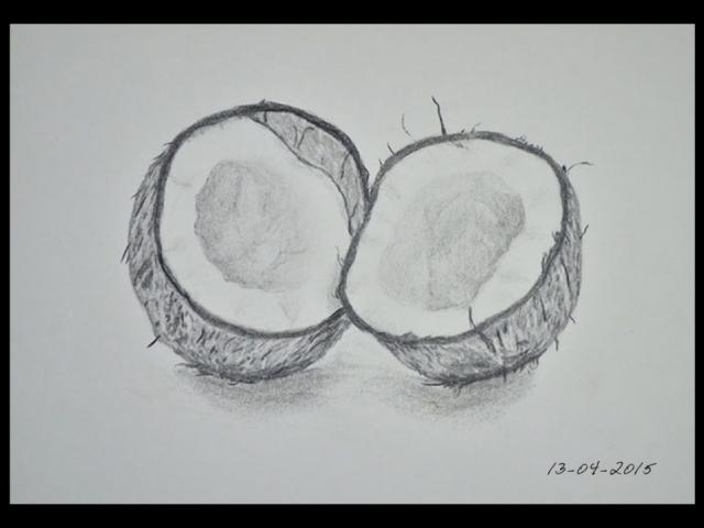 ClodiSuares_coconut_Charcoal_drawing