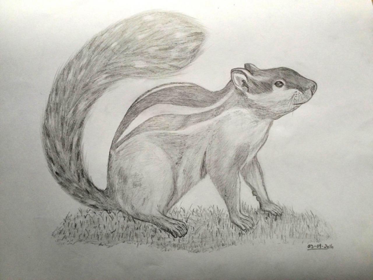 ClodiSuares_pencil-sketch